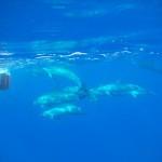 naomi イルカと泳ぐ