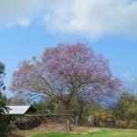 4月5、6日 『たまプラ 桜まつり』出店します